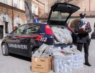 Bologna. 37 chili di marijuana nascosti in casa, arrestati la proprietaria e il suo inquilino