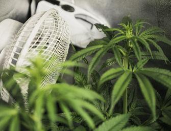 Reggio. Coltiva piante di marijuana nell'armadio di casa, denunciato ragazzo di 21 anni