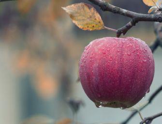In Emilia-Romagna attiva la piattaforma per la ricognizione dei danni delle gelate di marzo-aprile