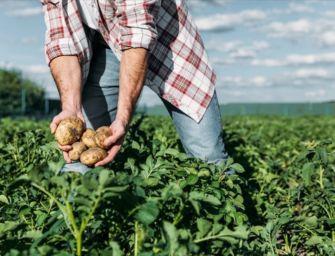 """""""Senza sostegni e senza diritti"""": il 10 aprile anche in Emilia la protesta dei lavoratori agricoli"""