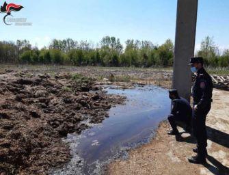 Smaltiva rifiuti liquidi speciali senza permessi, denunciato un allevatore della Bassa Reggiana