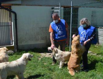 Sequestrati 9 cani Golden Retriever: ora cercano casa