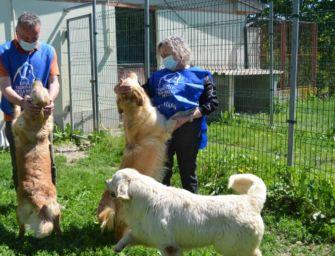 Canili e gattili, Regione investe per gli animali