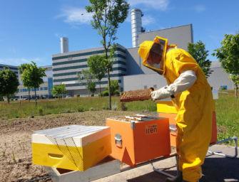 Giornata mondiale delle api, Iren posiziona alveari nella centrale di Torino Nord per monitorare la qualità dell'aria