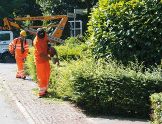 Reggio. Verde pubblico, rimozione di un pioppo e di un piccolo popolamento di conifere