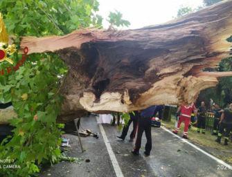 Novi. Pianta investe furgone e fa 2 feriti gravi, accertamenti della Provincia di Modena
