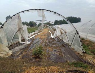"""RE: """"Agricoltura devastata da vento/grandine"""""""