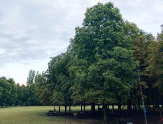 Forestazione urbana, dalla Regione 1,8 milioni di euro per aumentare il verde pubblico in città