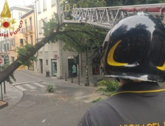 Reggio. Pianta contro un palazzo in Corso Garibaldi: chiusa la strada, rimosso il fusto