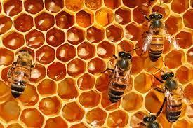 A difesa delle api e della biodiversità