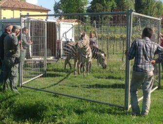 Reggio. Polizia alla ricerca della zebra