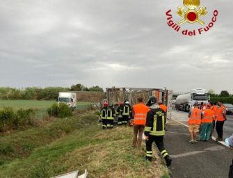 Camion si ribalta sull'A14 dopo un incidente: autista ferito, morte almeno tremila galline