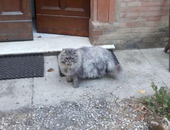 Lesignano, il giallo dei gatti scomparsi