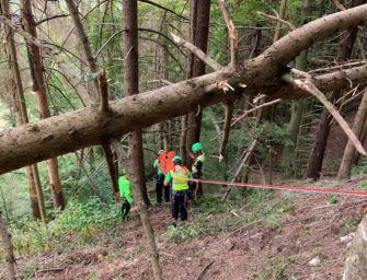 Operaio forestale di 56 anni travolto e ucciso da un tronco nei boschi di Corniglio